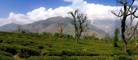 Palampur Tour, Palampur Tour Package, Tour to Palampur