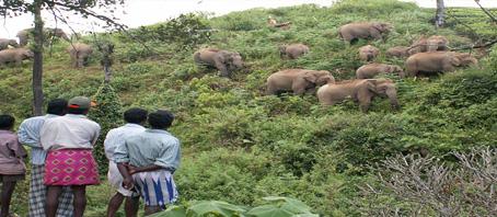 Palpur Kuno Wildlife Sanctuary Tour Palpur Kuno Wildlife